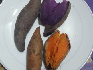 Wild Sweet Potatoes