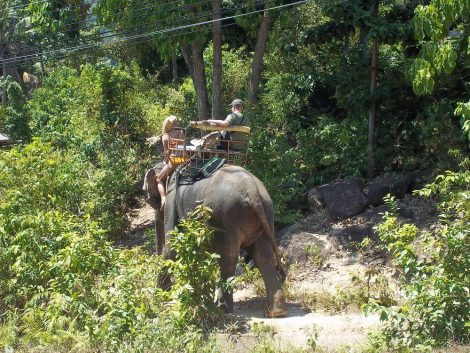 Elephant Trekking in Koh Phangan