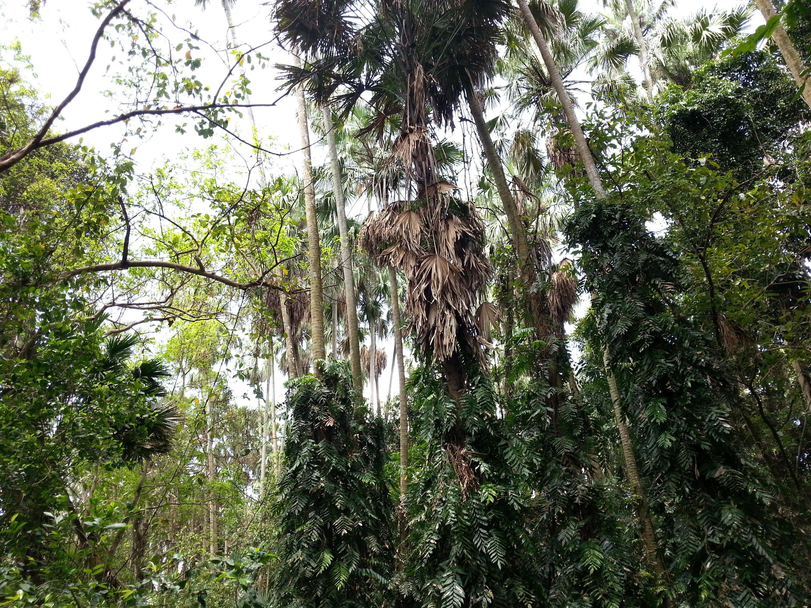 Wat Kham Chanot Forest