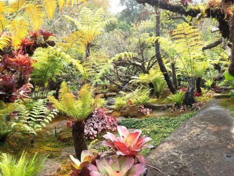 Garden at Wat Tham Pha Daen