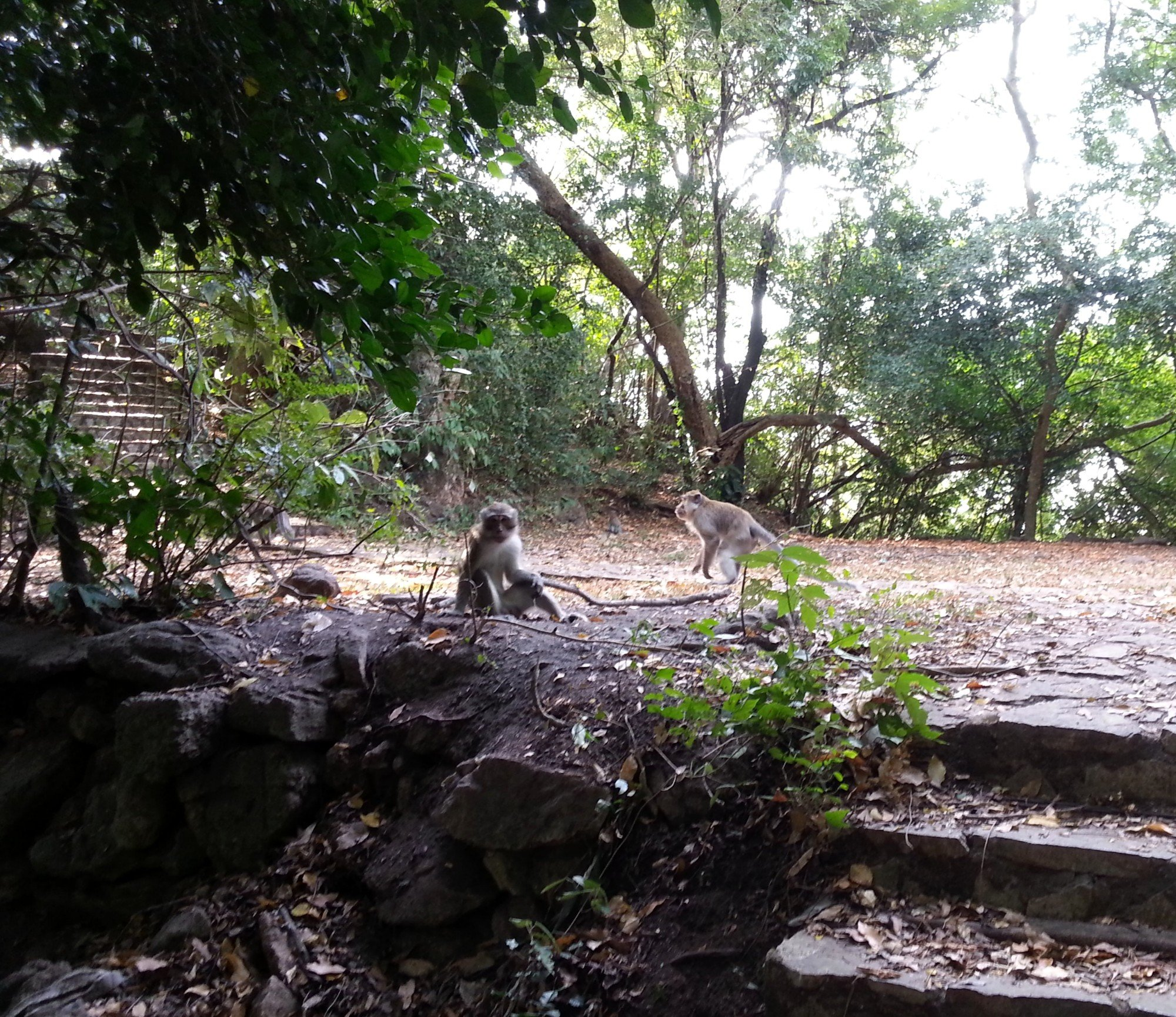 Monkeys on the hill above Wat Khuha Sawan