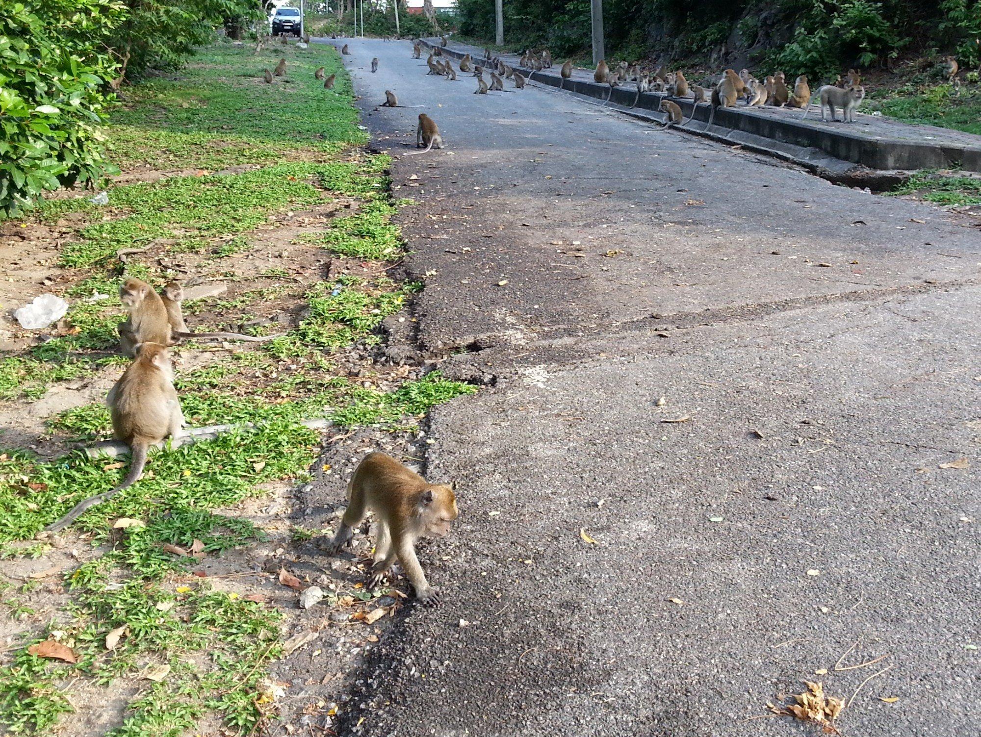 Monkeys on the path up Khao Noi Hill