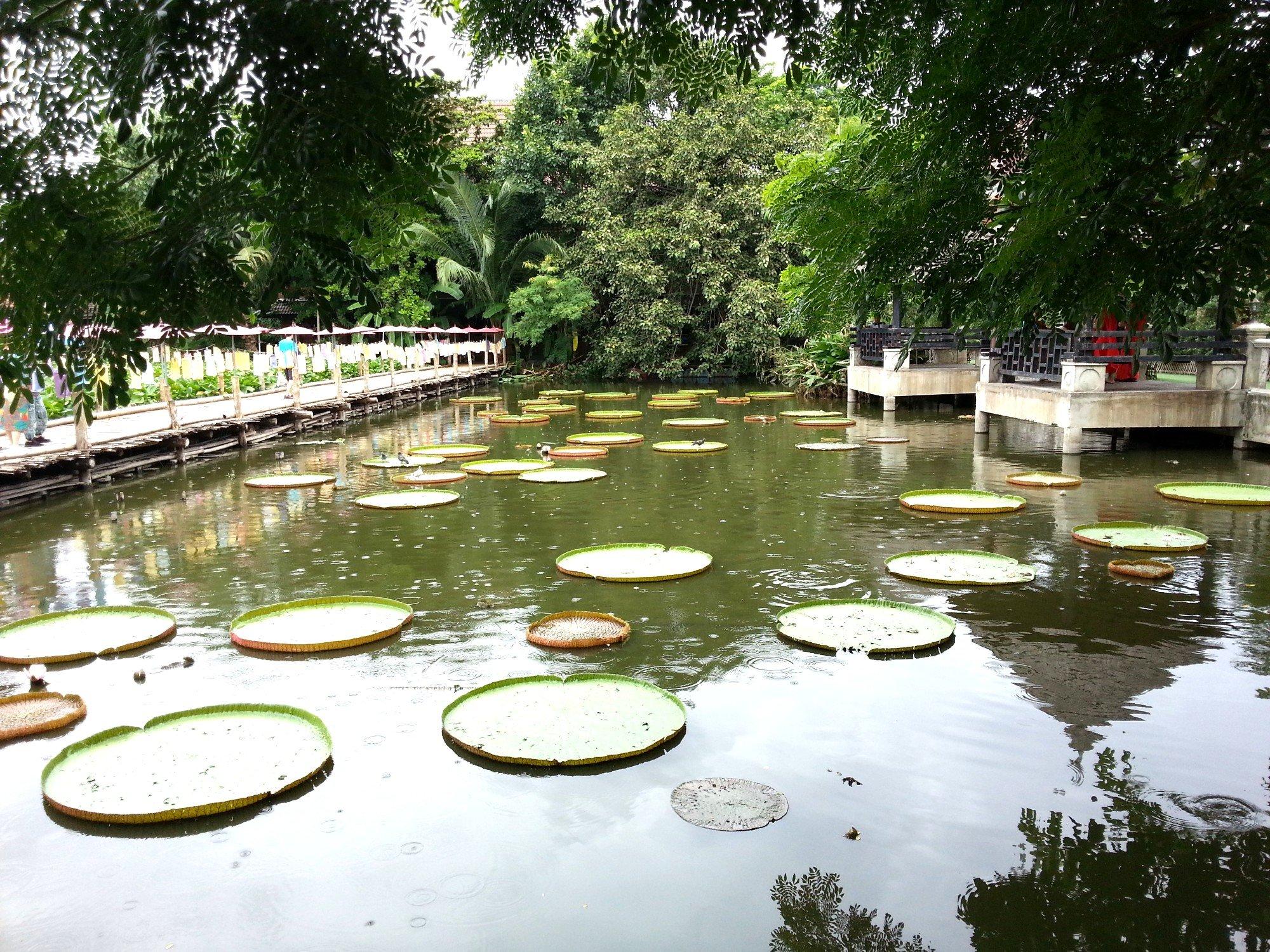 Pond at Wat Jet Lin